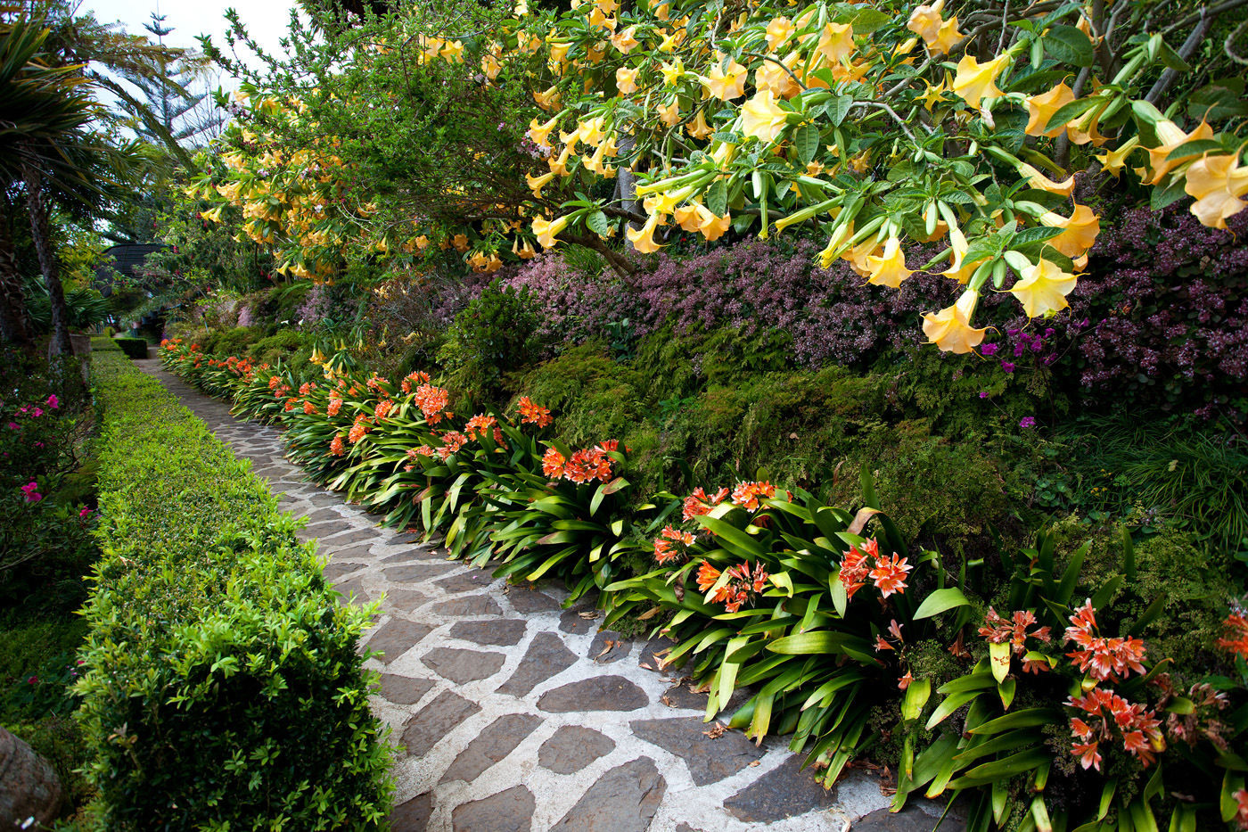 Tropical garden plants and flowers quotes for Outdoor plants and flowers